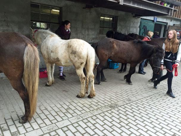 wie viel wiegt ein pferd